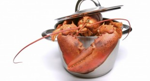Lobster delivery opens a Pandora's box of issues